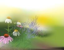 Härlig sommarmorgonbakgrund Arkivfoton