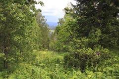 Härlig sommarskog i monteringen lilla Sinyuha Royaltyfria Bilder