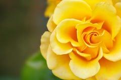Härlig sommarträdgård med blommande rosor Arkivfoton
