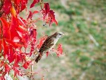 härlig sparrow Royaltyfri Fotografi