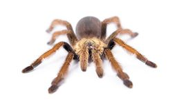 härlig spindel Arkivfoto