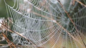 Härlig spindelnät som dekoreras med droppar av dagg som svänger i vinden i ottan Naturlig bakgrund arkivfilmer