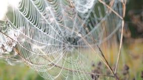 Härlig spindelnät som dekoreras med droppar av dagg som svänger i vinden i ottan Naturlig bakgrund stock video
