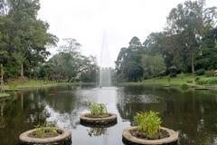 Härlig springbrunn i sjön: Cibodas botanisk trädgård i Puncak Royaltyfri Foto