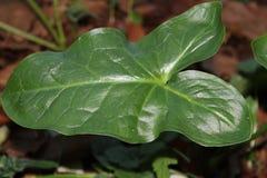 Härlig ståendebild av den gröna bladväxten Arkivbilder