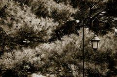 Härlig stearinljushållare Royaltyfria Foton