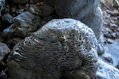 härlig sten Arkivfoton
