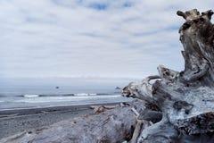 Härlig Stillahavskusten i den olympiska nationalparken arkivfoton