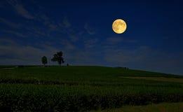 Härlig stor fullmåne över lantgård för grönt te på kullen arkivfoto