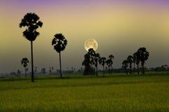 Härlig stor fullmåne över risfält i aftonen royaltyfri foto