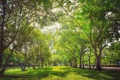 Härlig stor gräsplan Arkivfoton
