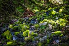 Härlig ström i rainforest i Sol Duc Valley, Washington Fotografering för Bildbyråer