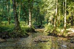 Härlig ström Repinka, Ryssland för skog fotografering för bildbyråer