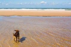 härlig strand Fotografering för Bildbyråer