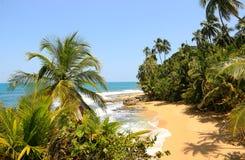 Härlig strand i Manzanillo, Costa Rica & x28; Karibiska Sea& x29; arkivbild