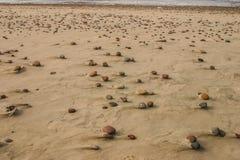 Härlig strand med färgrika kiselstenar i sand Fotografering för Bildbyråer