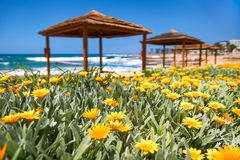 Härlig strand med gula blommor SOMMAREN landskap arkivfoto