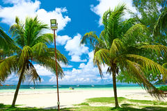 Härlig strand med palmträdet på Seychellerna Royaltyfri Bild