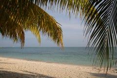 Härlig strand och kokospalm royaltyfria foton