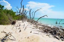 Härlig strand på Cayo JutÃas Arkivbild
