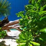 Härlig strand på Seychellerna Arkivbilder