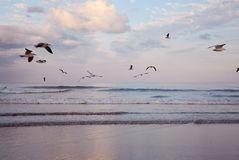 Härlig strand på soluppgång Arkivfoto