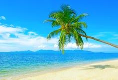 härlig strand Sikten av den trevliga tropiska stranden med gömma i handflatan omkring Arkivbild