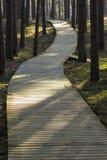 Härlig strandpromenad i skog Royaltyfri Bild