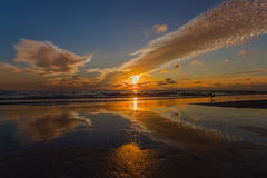 Härlig strandsolnedgång med en Seagull Royaltyfri Fotografi