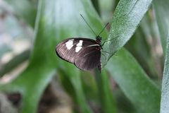 Härlig svart fjäril på ett blad arkivbild
