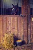 Härlig svart häst i ladugården Arkivbilder