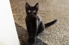 Härlig svart katt med gula ögon Arkivbild