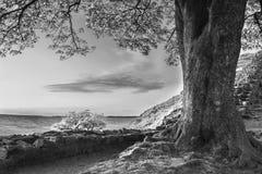 Härlig svartvit landskapbild av sykomor Gap på ht Royaltyfri Foto