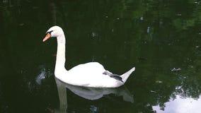 härlig swan lager videofilmer