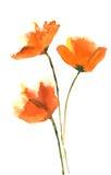 härlig tät blommatulpan upp Fotografering för Bildbyråer