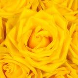 härlig tät rose övre yellow Arkivfoton