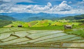 Härlig terrassrislantgård av Ching Mai, Thailand Arkivfoton