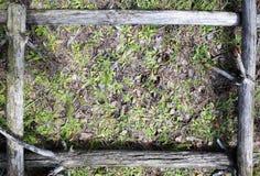 Härlig texturerad ram från gamla träd Arkivbilder
