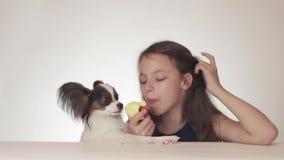 Härlig tonårig flicka och hund kontinentala Toy Spaniel Papillon som äter det smakliga nya röda äpplet på det vita bakgrundsmater arkivfilmer