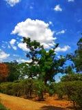 Härlig träd- och molnbakgrundsbild vid WandererPhotography arkivbild