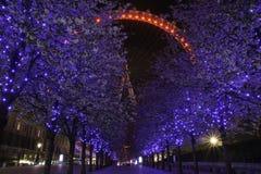 Härlig trädbelysning och London öga Royaltyfri Foto