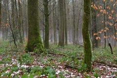 Härlig trädbygd Arkivbild