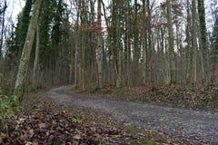 Härlig trädbygd Arkivfoton