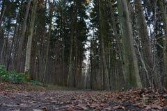 Härlig trädbygd Arkivbilder
