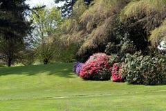 härlig trädgård Arkivbild