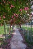 härlig trädgård Royaltyfri Foto