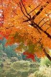 härlig trädgård för höst Arkivbilder