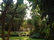 Härlig trädgård i aftontiden royaltyfri foto