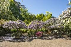 Härlig trädgård i Mt wilson arkivbild