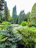 Härlig trädgård med barrträd och ett damm royaltyfri bild